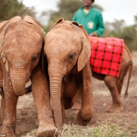 Visit The David Sheldrick Wildlife Trust in Nairobi, Kenya - Bucket List Ideas