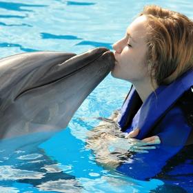 Swim with the dolphins - Bucket List Ideas