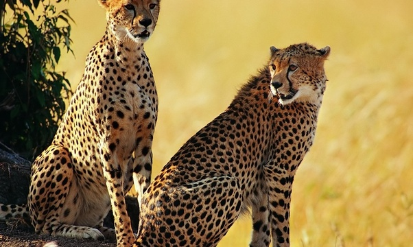 African Safari - Bucket List Ideas