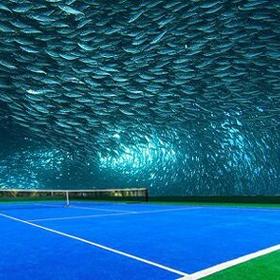 Go to An Underwater Stadium - Bucket List Ideas
