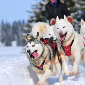 Faire du chien de traineau dans le grand nord - Bucket List Ideas