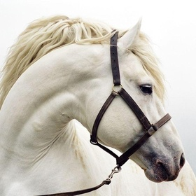 Riding a white horse - Bucket List Ideas