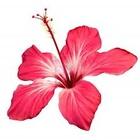 hibisca's avatar image