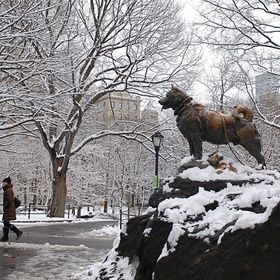 See the Statue of Balto in Central Park - Bucket List Ideas