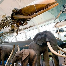 Visit the Natural Historical Museum, London - Bucket List Ideas
