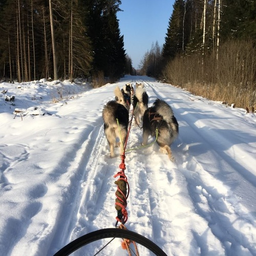 Ride a dog sled - Bucket List Ideas