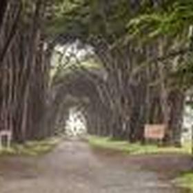 Walk through the Cypress Tree Tunnel - Bucket List Ideas