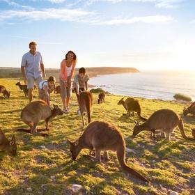 Pet a kangeroo at Kangeroo Island in Australia - Bucket List Ideas