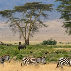 Visit Serengeti National Park - Bucket List Ideas