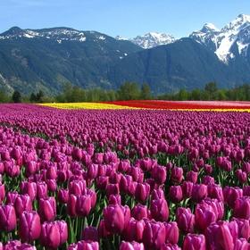 See Holland in bloom - Bucket List Ideas