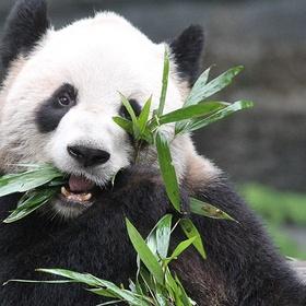 Visit Toronto Zoo - Bucket List Ideas