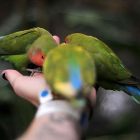 Feeding a bird in the palm of my hand - Bucket List Ideas