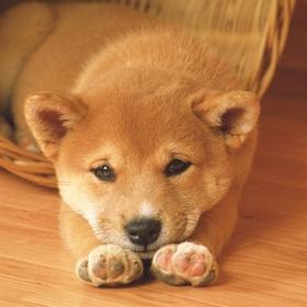 Adopting a dog - Bucket List Ideas
