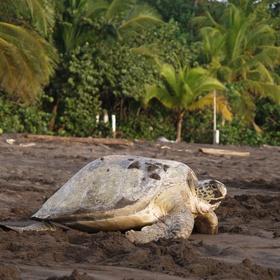 Visit Tortuguero National Park, Costa Rica - Bucket List Ideas