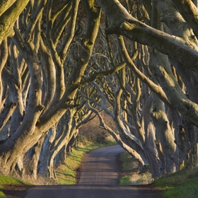 Visit the Dark Hedges in Ireland - Bucket List Ideas