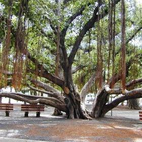 Visit Banyan Tree Park - Bucket List Ideas