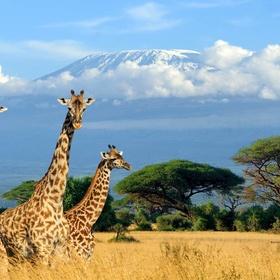 Safari Tour in Africa - Bucket List Ideas