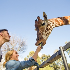 Feed giraffes - Bucket List Ideas