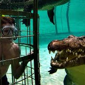 Go crocodile diving - Bucket List Ideas
