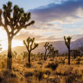 Visit Joshua Tree National Park, California - Bucket List Ideas