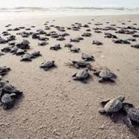 See baby sea turtles hatch in Costa Rica - Bucket List Ideas