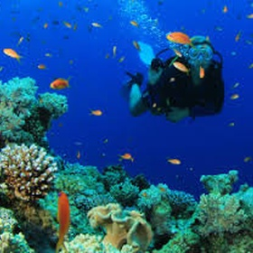Go scuba diving!!! - Bucket List Ideas