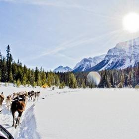Go Dog Sledding in the Canadain Rockies - Bucket List Ideas