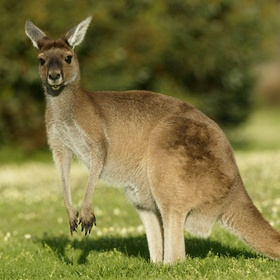 See a Kangaroo - Bucket List Ideas