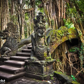 Visit Ubud Monkey Forest~ Bali - Bucket List Ideas