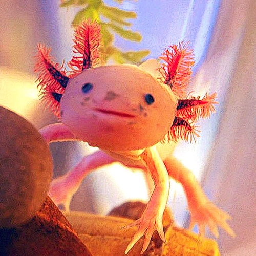 Find More Info About Axolotl's - Bucket List Ideas