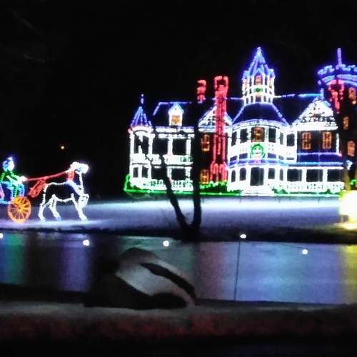 Go to the Springfield Christmas Lights - Bucket List Ideas