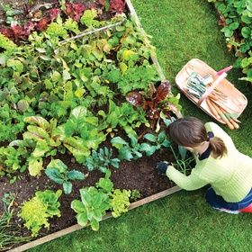 Grow a Vegetable Garden - Bucket List Ideas