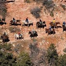 Ride a mule down the Grand Canyon - Bucket List Ideas