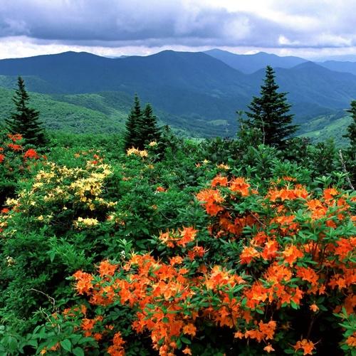 Hike the Appalachian Trail - Bucket List Ideas