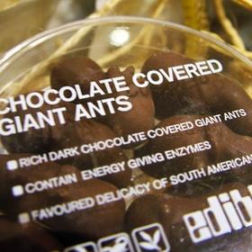 Eat Chocolate Ants - Bucket List Ideas