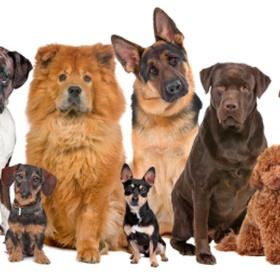 Go to a dog show - Bucket List Ideas