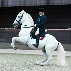 See a Lipizzaner Horse Show - Bucket List Ideas