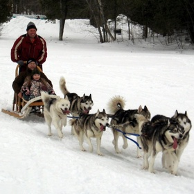 Mush a dog sled - Bucket List Ideas