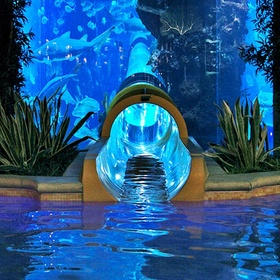 Slide down the waterslide at Golden Nugget Hotel & Casino ~Las Vegas, Navada - Bucket List Ideas
