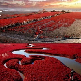 Red beach, Panjin, China - Bucket List Ideas