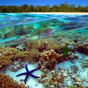 Dive in the great barrier reef - Bucket List Ideas