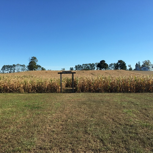 Walk Through a Corn Maze - Bucket List Ideas