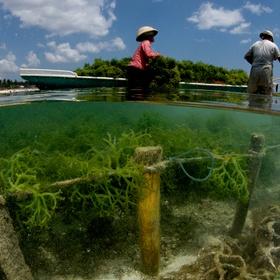 Observe Seaweed Farming in bali - Bucket List Ideas