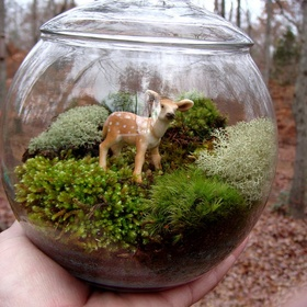 Make a cool terrarium - Bucket List Ideas