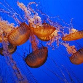 Go to the Vancouver Aquarium - Bucket List Ideas