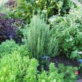 Grow an abundant herb garden - Bucket List Ideas