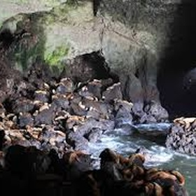 Visit the worlds largest sea lion caves in Florence Oregon - Bucket List Ideas