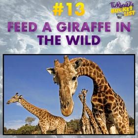 Feed a Giraffe in the Wild - Bucket List Ideas
