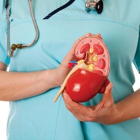 Donate a Kidney - Bucket List Ideas