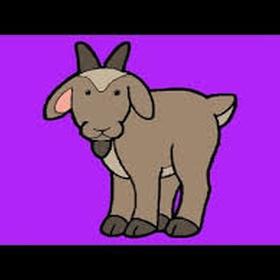 Play peek-a-boo with a goat - Bucket List Ideas